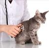 Ветеринарные клиники в Заполярном